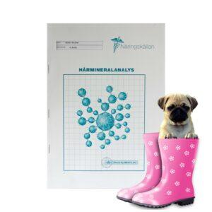 Hårmineralanalys för hund hjälper dig att hålla den friskare och må bättre